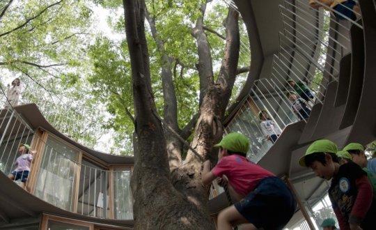 Un niño trepa un árbol en la guardería Fuji